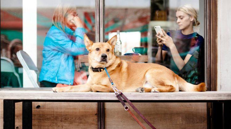 Los 10 mejores bares y restaurantes para ir con tu perro en Barcelona
